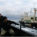TV Review: Whale Wars
