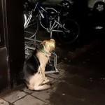 Cindy & Bert – Die Hund von Baskerville