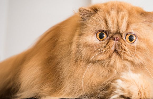 'Catwalk' Is a Light, Breezy Trip to Canada's Best Cat Shows